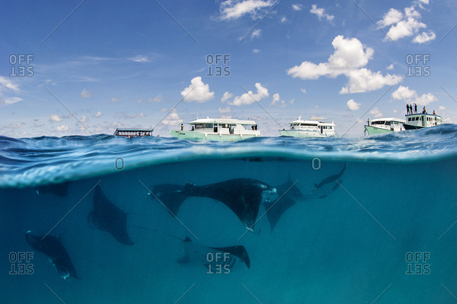 A Mantas under the blue sky, above sea level some boats with divers