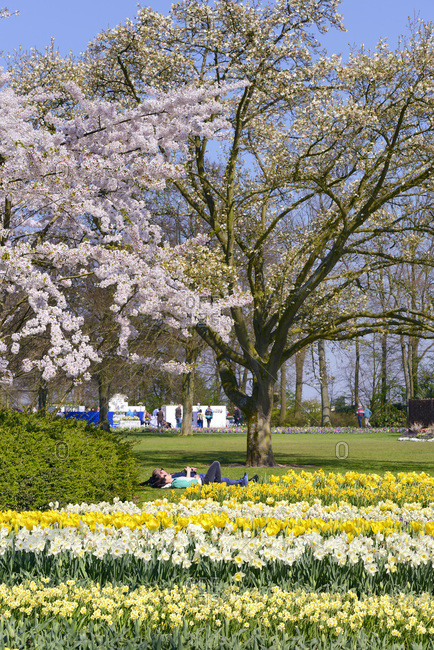 South Holland, Netherlands - August 12, 2016: Keukenhof Gardens