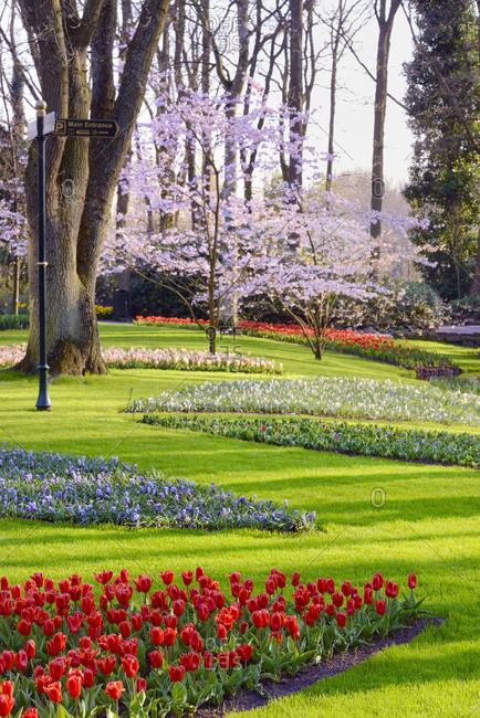 Tulips field in Keukenhof Gardens