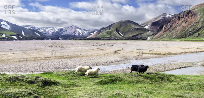 The highlands of Landmannalaugar