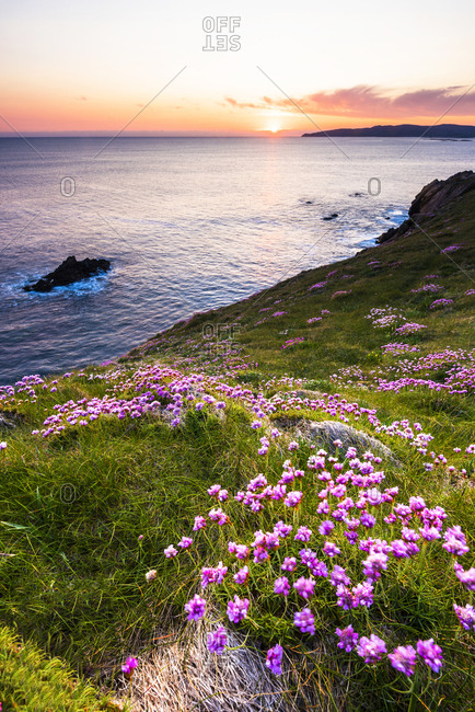 Crohy Head, flowers blooming on top of the cliffs at sunset