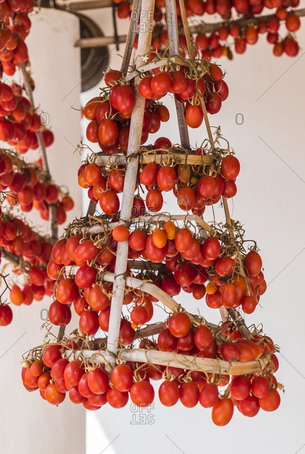 Hanging tomatoes on a typical wood dryer