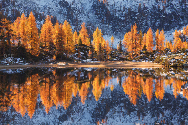 San Giuliano lakes, the larches are reflected into the lakes an autumn morning