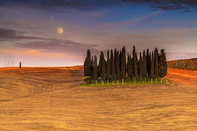 Cypresses near San Quirico d' Orcia