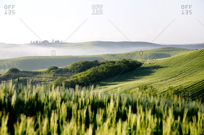 Landscape near Siena