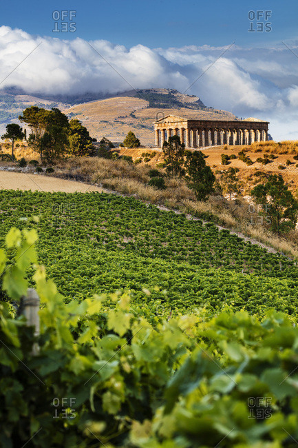 Temple of Segesta and vineyard