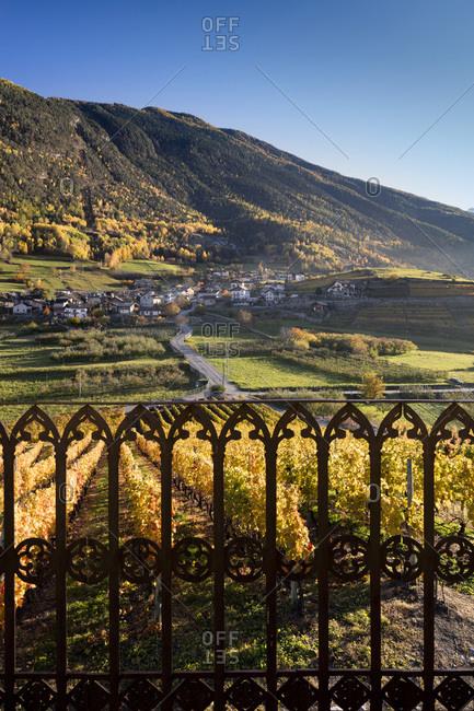 Vineyards of Aymavilles