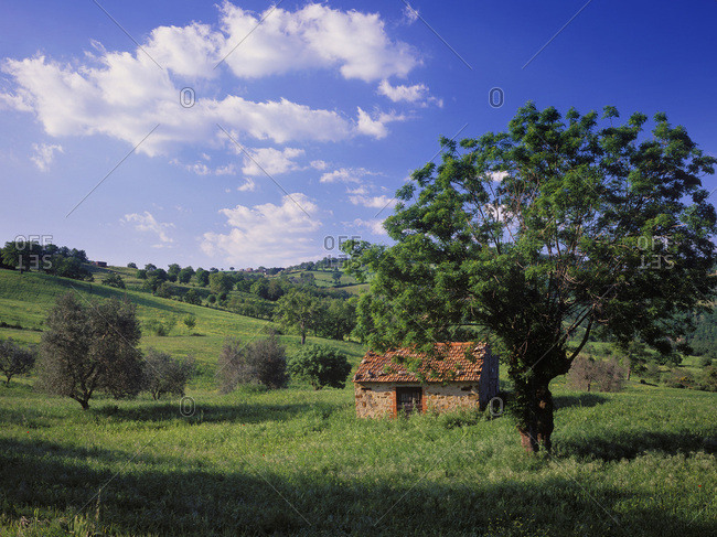 Maremma landscape near Scansano village