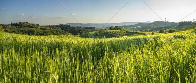 Landscape near Bacio