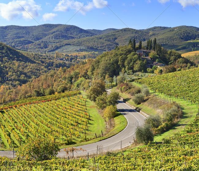 Vineyards near Piazza locality