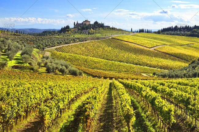 Italy, Tuscany, Siena district, Chianti, Gaiole in Chianti, Vineyards