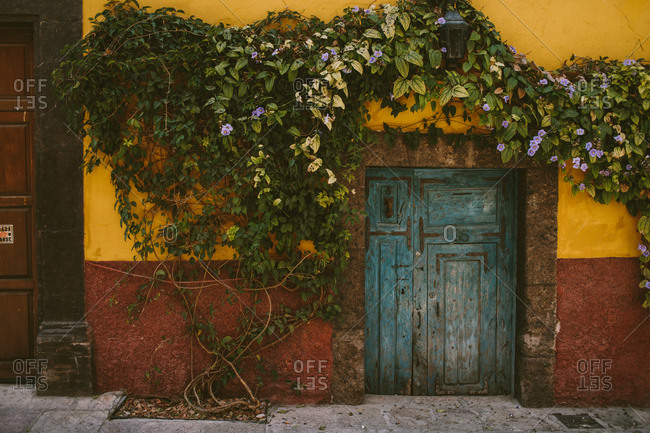 Colorful doorway with lush vine