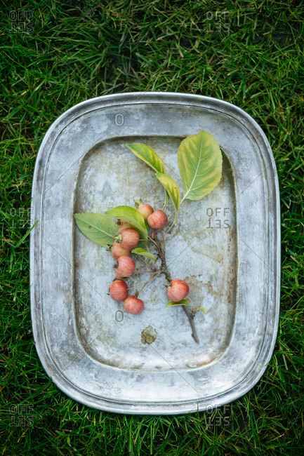 Apple branch on a platter