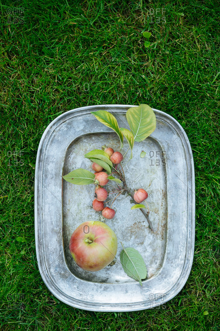 Apple and apple branch on tray