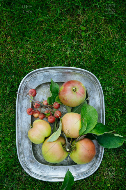 Apples and apple branch on tray