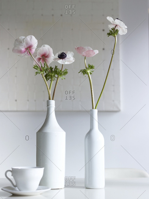 Pink and white anemone flowers in white bottles
