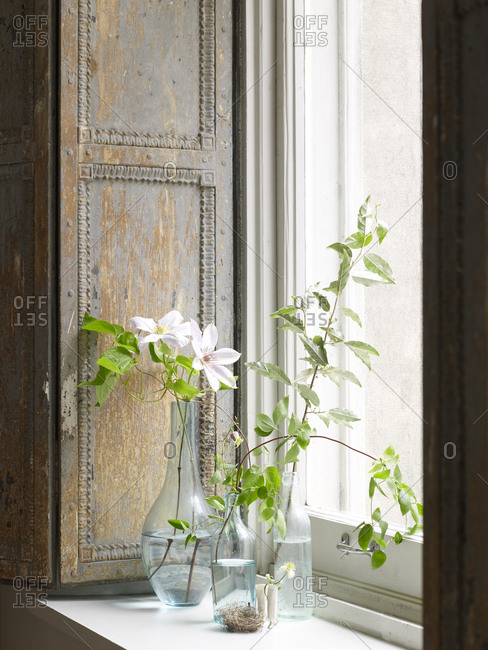 White clematis flowers in vases and glasses on a windowsill