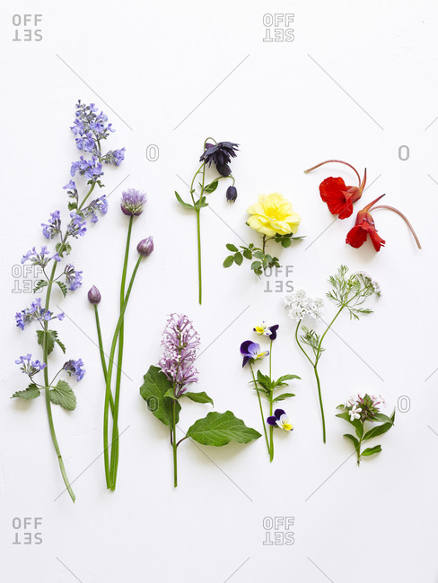 Edible flowers arranged on white background