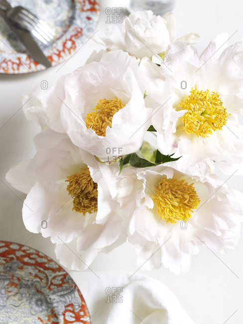 Pale pink peonies with yellow center