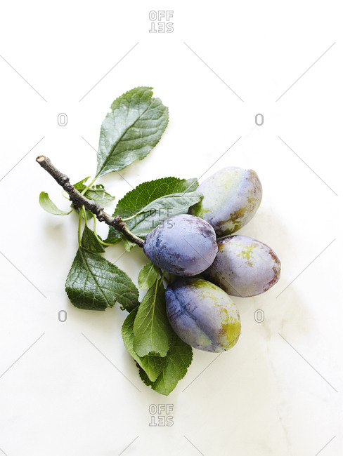Fresh plums on branch on white marble