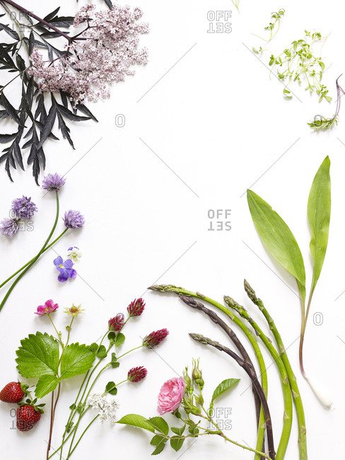Arrangement of spring edible plants and flowers