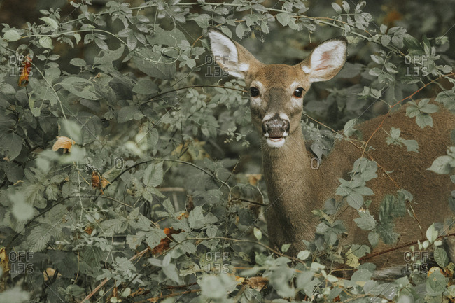 Portrait of deer standing by plants