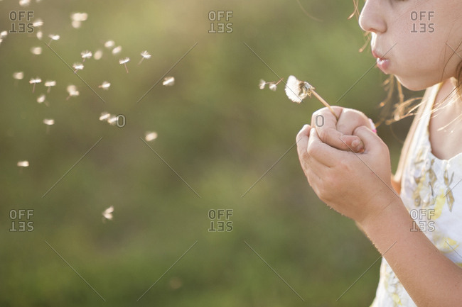 Midsection of girl blowing dandelion seed while standing on grassy field
