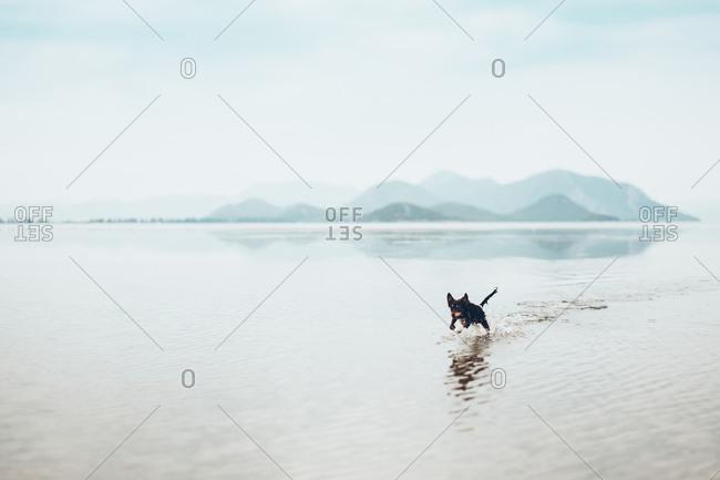 Playful dog running in lake against sky