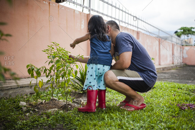 Father and daughter examining plants in backyard