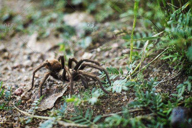 High angle view of tarantula on field