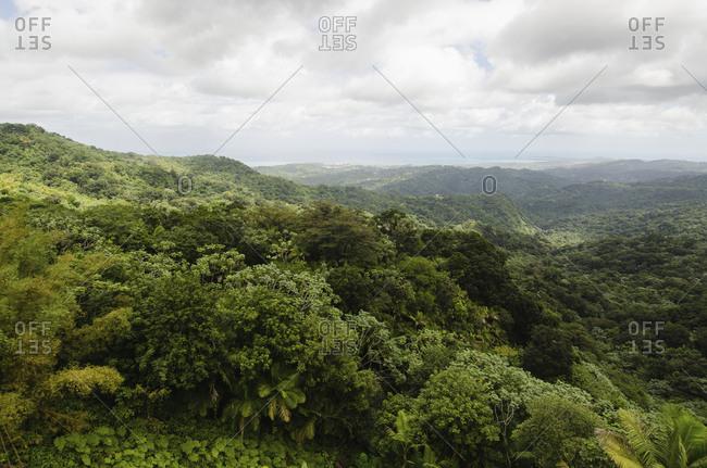 Puerto Rico, El Yunque National Forest, Green landscape