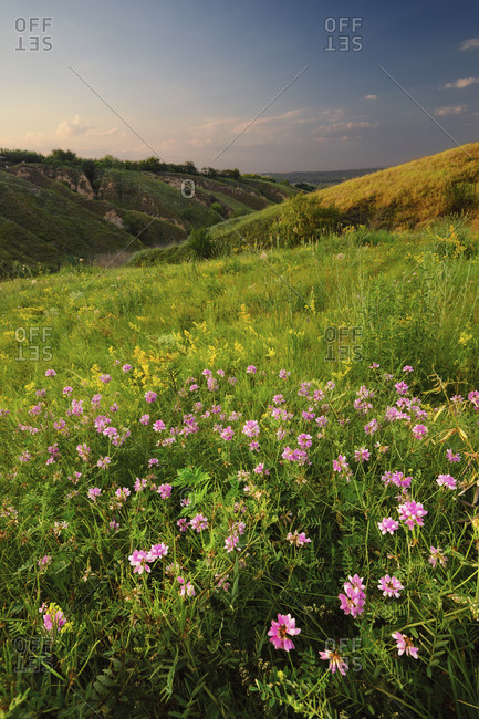 Ukraine, Dnepropetrovsk, Meadow with pink flowers