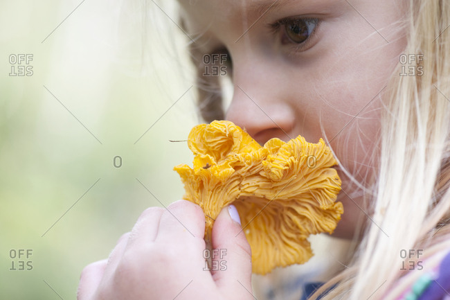 Girl smelling chanterelle