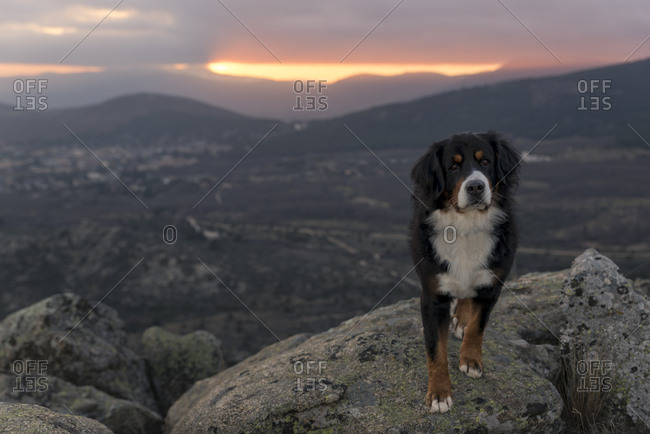Dog enjoying the sunset from the top of the mountain