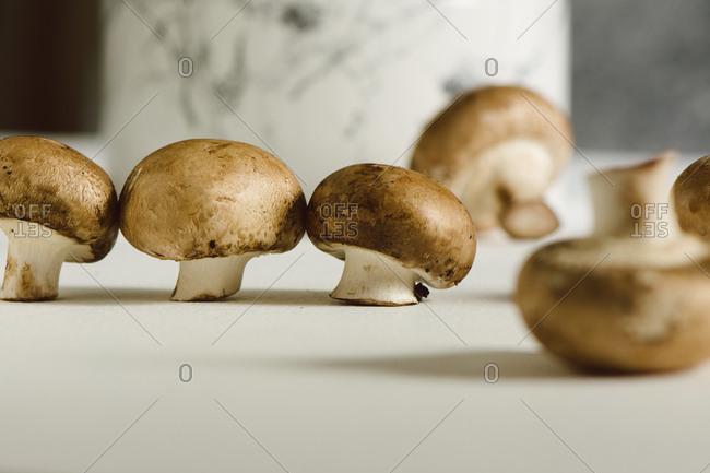 Fresh raw mushrooms, in white background, Portobello variety