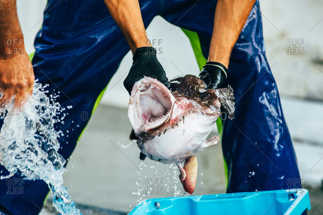 Man holding a fish in the market while washing it in Palamos, Spain,