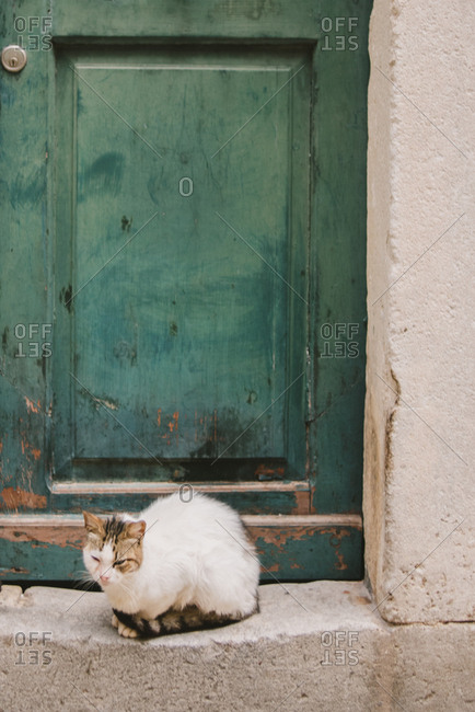 Cat by a green door