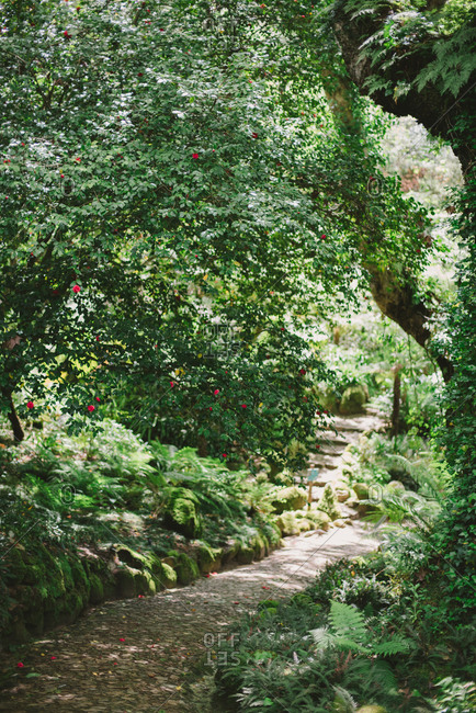 Lush foliage surrounding path in Sintra, Portugal