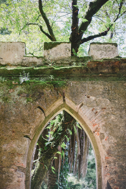 Tree above archway at the Montserrat Palace in Sintra, Portugal