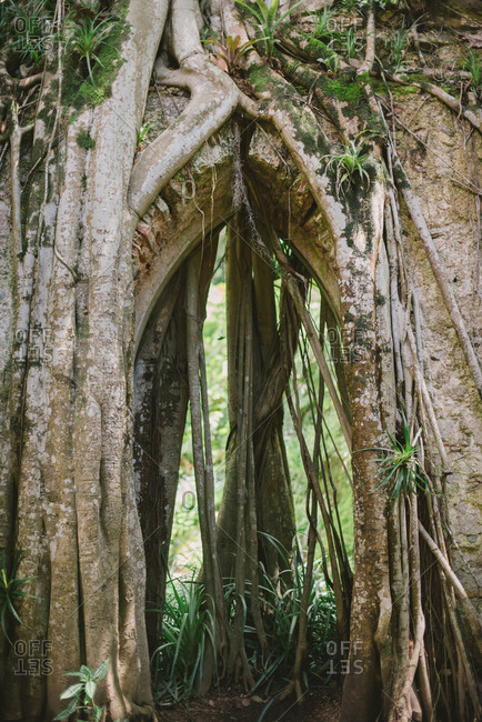 Tree roots growing around archway at the Montserrat Palace in Sintra, Portugal