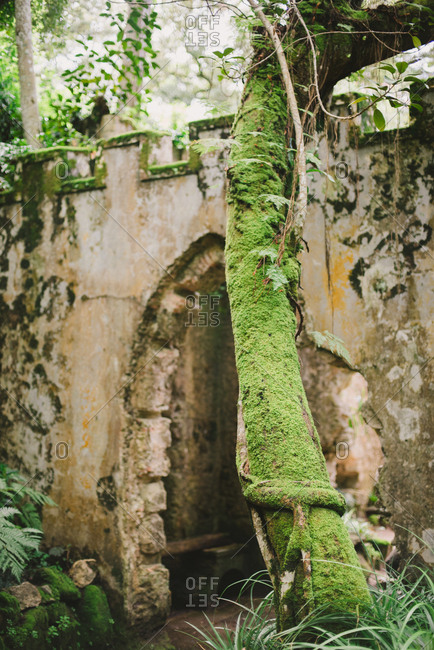 Moss covered tree by an archway at the Montserrat Palace in Sintra, Portugal