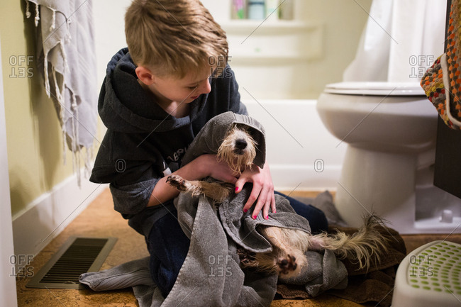 Boy drying dog off with towel after bath