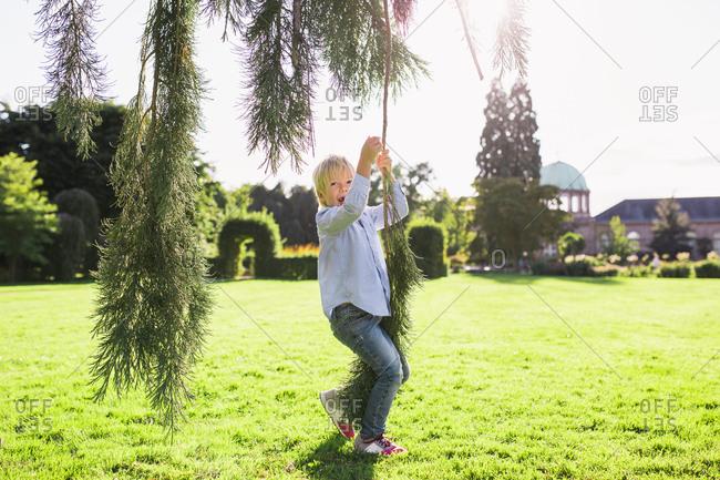Little boy swinging on a tree branch