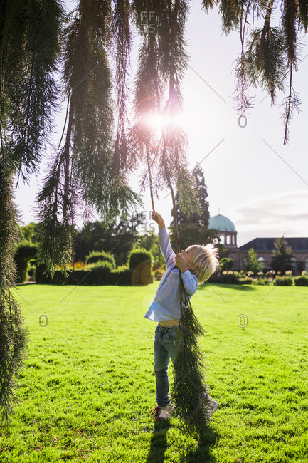 Little boy reaching up for a tree branch