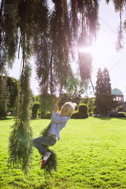 Blonde little boy swinging on a tree branch