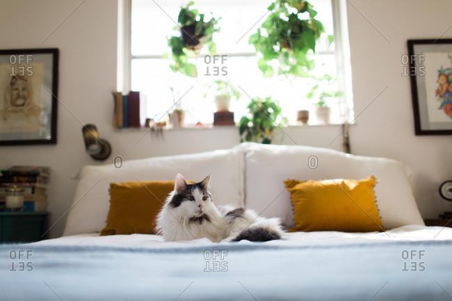 Fluffy cat lying on a bed
