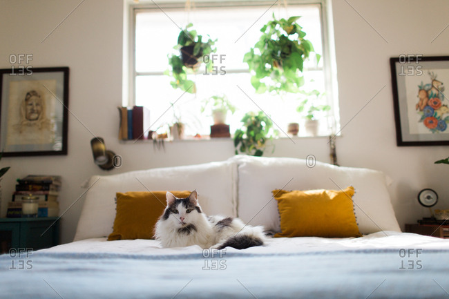 Furry cat lying on a bed