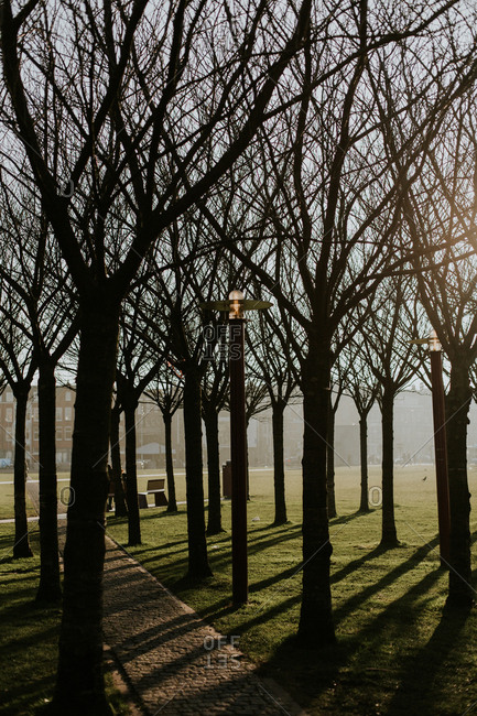 Bare trees in a park