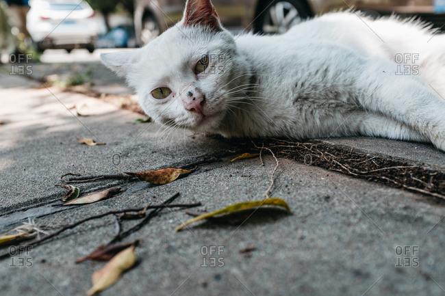 Alley cat, in Guangzhou, China.