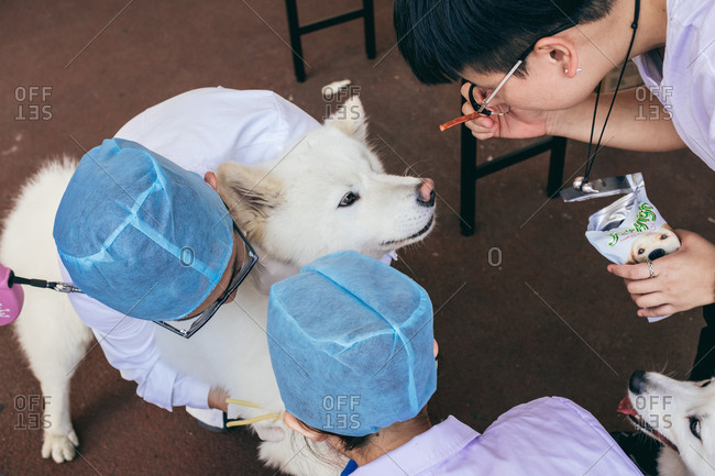 4/2/17: Veterinarians draw blood for a pet dog, in Guangzhou, China.